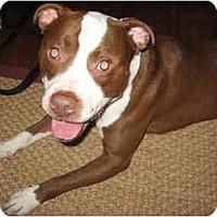 Adopt A Pet :: Cisco - Reisterstown, MD