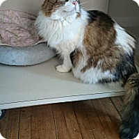 Adopt A Pet :: Rickie - Orillia, ON