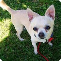 Adopt A Pet :: Taco - Jackson, MI