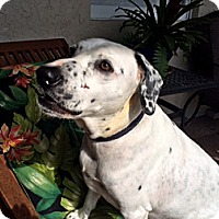 Adopt A Pet :: Paul - Tampa, FL