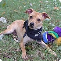 Adopt A Pet :: Sansa - Mocksville, NC
