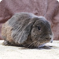 Adopt A Pet :: Thumper - Fountain Valley, CA