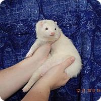 Adopt A Pet :: Solar - Navarre, FL