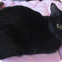 Adopt A Pet :: Weenie - Witter, AR