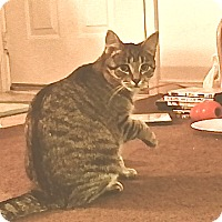 Adopt A Pet :: Sienna - Fowlerville, MI