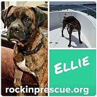 Adopt A Pet :: Ellie - Jacksonville, AL