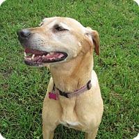 Adopt A Pet :: Kasie Jo - Lufkin, TX