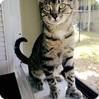 Adopt A Pet :: Squirt - Royal Palm Beach, FL