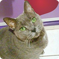 Adopt A Pet :: Simi - Union City, NJ