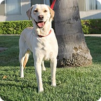 Adopt A Pet :: HoneyComb - Corona, CA