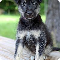 Adopt A Pet :: Coco - Waldorf, MD