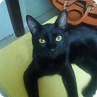 Adopt A Pet :: Schenn - Gainesville, FL