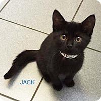 Adopt A Pet :: Jack - Merrifield, VA