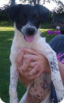 Border Collie Mix Dog for adoption in Cincinnati, Ohio - Skunk