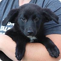 Adopt A Pet :: Nico - Minneapolis, MN