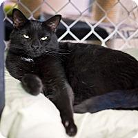 Adopt A Pet :: Ella - Freeport, NY