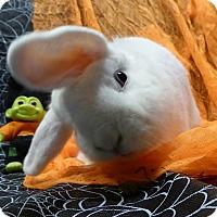 Adopt A Pet :: Dervish - Alexandria, VA