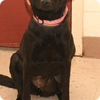 Adopt A Pet :: RAYLENE - McDonough, GA