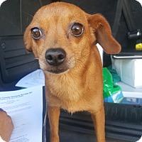 Adopt A Pet :: Dora - Youngsville, NC
