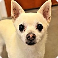 Adopt A Pet :: Harley - Seattle, WA