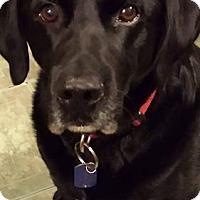 Adopt A Pet :: RJ - Midlothian, VA