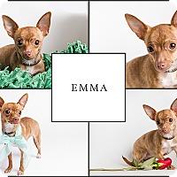 Adopt A Pet :: Emma - Ogden, UT