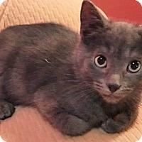 Adopt A Pet :: Jolly - Mt. Prospect, IL