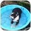 Photo 2 - Australian Shepherd Dog for adoption in Orlando, Florida - Tootsie