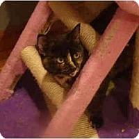 Adopt A Pet :: Reesa-PETSMART - Muncie, IN