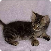 Adopt A Pet :: Bowie - Modesto, CA