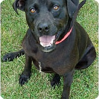 Adopt A Pet :: Carly - Kansas City, MO