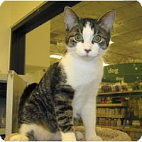 Adopt A Pet :: PJ - Warminster, PA
