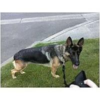 Adopt A Pet :: Madchen - Everett, WA
