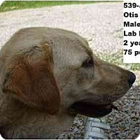 Adopt A Pet :: Otis - RESCUED! - Zanesville, OH