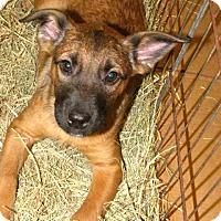 Adopt A Pet :: Caputo - Gainesville, FL