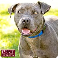 Adopt A Pet :: Bo - Marina del Rey, CA