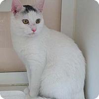 Adopt A Pet :: Frank - Merrifield, VA