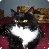 Adopt A Pet :: Suzie Q - Salem, OR