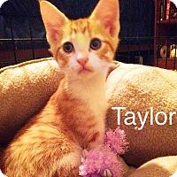 Adopt A Pet :: Taylor - Bentonville, AR