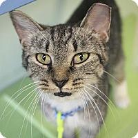 Adopt A Pet :: Mattie - Indianapolis, IN