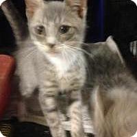 Adopt A Pet :: Rolo - East Brunswick, NJ