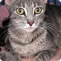 Adopt A Pet :: Rebecca - St Louis, MO