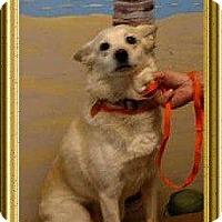 Adopt A Pet :: MARCIE - Metairie, LA