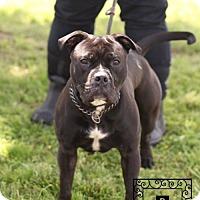 Adopt A Pet :: Spotsylvania Shelter #16-3500 - Fredericksburg, VA