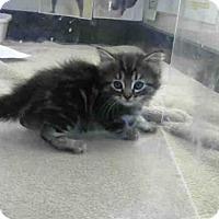 Adopt A Pet :: *TAHOE - Sacramento, CA