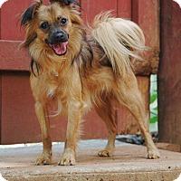 Adopt A Pet :: Tucker - Lawrenceville, GA