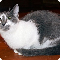 Adopt A Pet :: Scout - Morganton, NC