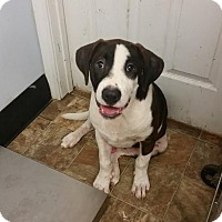 Adopt A Pet :: Billie - Darlington, SC