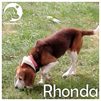 Adopt A Pet :: Rhonda - Pittsburgh, PA