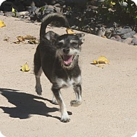 Adopt A Pet :: Mona - Henderson, NV